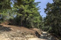 Mountain road of pilgrimage to the Tiger Nest Taktshang monastery, Bhutan Royalty Free Stock Image