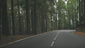 Mountain road in a pine forest stock footage