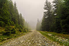 mountain road among pine trees Royalty Free Stock Photos