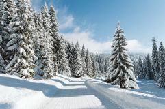 A mountain road and snow-covered pines royalty free stock image