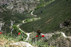 The mountain, the road and some poppies. Mountain view in the mid of the day protagonized by a narrow road and a few poppy flowers stock image