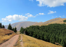 Mountain road in a summer day Stock Photography
