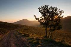 Mountain road at sunrise. View of the road, sun through the trees Royalty Free Stock Photo