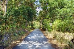 Mountain road surrounded by very green vegetation of typical tre. Es of an Atlantic forest, in Galicia, Spain Royalty Free Stock Image