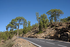 Mountain Road in Tenerife, Spain Stock Images