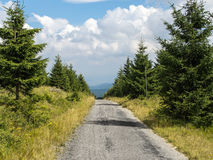Mountain road through young forest in Europe. Mountain road or path through young forest in Orlicke mountains, central Europe, countryside traveling hiking Royalty Free Stock Photo
