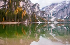 Mountain rocks and autumn forest reflected in water of Braies Lake, Dolomite Alps, Italy. Mountain rocks and autumn forest reflected in water of Braies Lake Royalty Free Stock Image