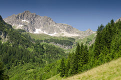 Mountain with rocks and firs Stock Image
