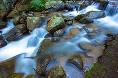 Mountain Rocky Stream. Closeup Photo. Colorado Fauna and Flora Stock Image