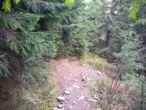 Mountain route to Mount Sinyak from Bukovel Gorgany, Ukrainian Carpathians. Mountains in the fall, evergreens, stones with moss, hills, hills, mountains, blue stock photos