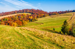 Mountain rural area in late autumn. Season. agricultural field on a hill near the forest with red foliage. beautiful and vivid countryside landscape Stock Photo