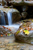 Mountain's brook in autumn forest Stock Photos