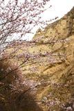 Mountain's early spring Stock Photos