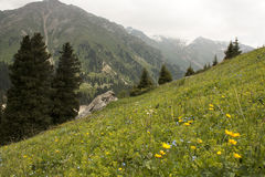 Mountain's landscape. Meadow of flowers Stock Image