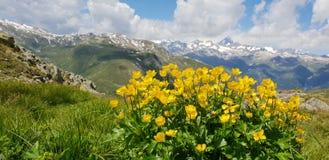 Mountain& x27; s y flores foto de archivo libre de regalías