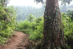 Mountain salak. Adventure with Hiking royalty free stock images