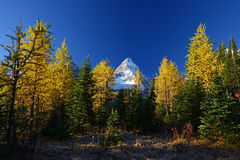 Mountain scene in autumn Royalty Free Stock Images