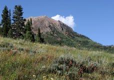 Mountain Scenery. Mountain scene of wildflowers on hillside in early summer stock photography