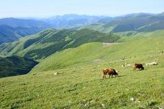 Mountain scenery Stock Photos