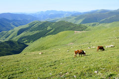 Mountain scenery. The mountain scenery in the sunshine stock photos