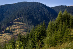 Mountain scenery. And winding forestry road in the distance.Romanias Carpathian mountains stock photo