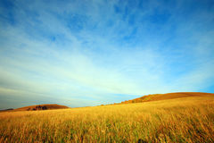 Mountain Scenery. The yellow grass field on the mountain, blue sky and white clouds, form a beautiful autumn scenery. This picture is taken on an autumn evening stock image