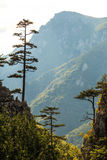 Mountain scenery with black pine trees Royalty Free Stock Images