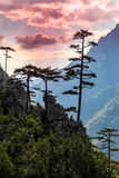 Mountain scenery with black pine trees Royalty Free Stock Image
