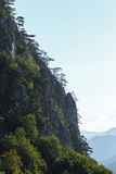 Mountain scenery with black pine trees Stock Photography