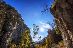 Mountain scenery with black pine trees Stock Photo