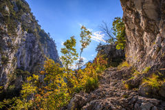 Mountain scenery with black pine trees Stock Images