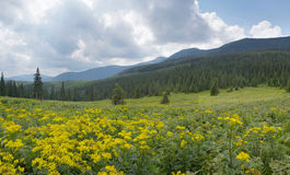 Mountain scenery in Carpathians Stock Image