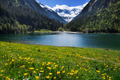 Mountain scenery clear lake with meadow flowers in foreground. Stilluptal , Stillupsee, Austria, Tyrol stock photo