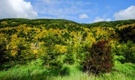 Mountain scenery in New Zealand. Beautiful scenery of mountains at autumn in New Zealand Royalty Free Stock Image