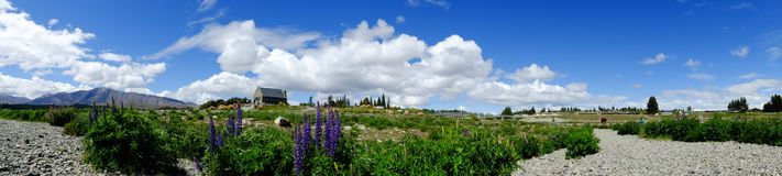 Mountain scenery in New Zealand. Panorama of Lupine flower field at sunny day in New Zealand Stock Image