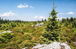 Mountain scenery of Rychlebske hory mountains on czech-polish borders with small rocks, biilberry bushes, small trees and blue sky. Mountain scenery of Stock Photo