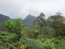 Mountain scenery in Sri Lanka Royalty Free Stock Photography