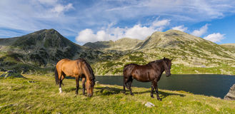 Alpine scenery in the summer, in the Transylvanian Alps, with wild horses on green pasture Stock Photos