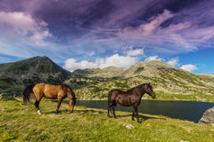 Alpine scenery in the summer, in the Transylvanian Alps, with wild horses on green pasture Royalty Free Stock Image