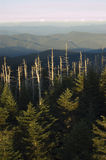 Mountain Scenic with Dead Trees. Mountain view with dead trees sticking up in forground Stock Image