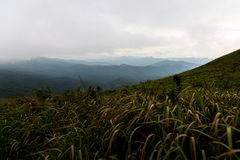 Mountain and sea of mist under the rain and cloudy sky view from. Suan Ya Luang at Nan province ,North of Thailand Royalty Free Stock Photography
