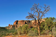 Mountain of Sedona Royalty Free Stock Photos