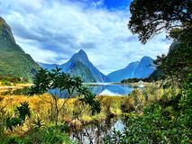 Mountain and See Surrounded by Tropical Plants. Variety of plants and vegetation with Milford Sound mountains and the sea in the background on a sunny day royalty free stock photo