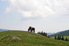 Mountain serene scene with farm animals. Mountain serene meadow scene with horses Stock Photos
