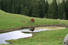 Mountain serene scene with farm animals. Mountain serene meadow scene with horses Stock Photography