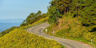 Mountain sharp curve road with wild Mexican sunflower blossom Stock Photo