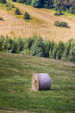 Mountain Sheaf. Italy Stock Images