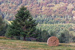 Mountain Sheaf and Tree. Italy Stock Image