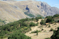 Mountain Sheeps. Madonie Mountain landscape (Sicily-Italy royalty free stock photography