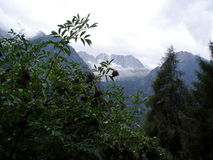 Mountain with shrub. Mountains with shrub with black berries Royalty Free Stock Image